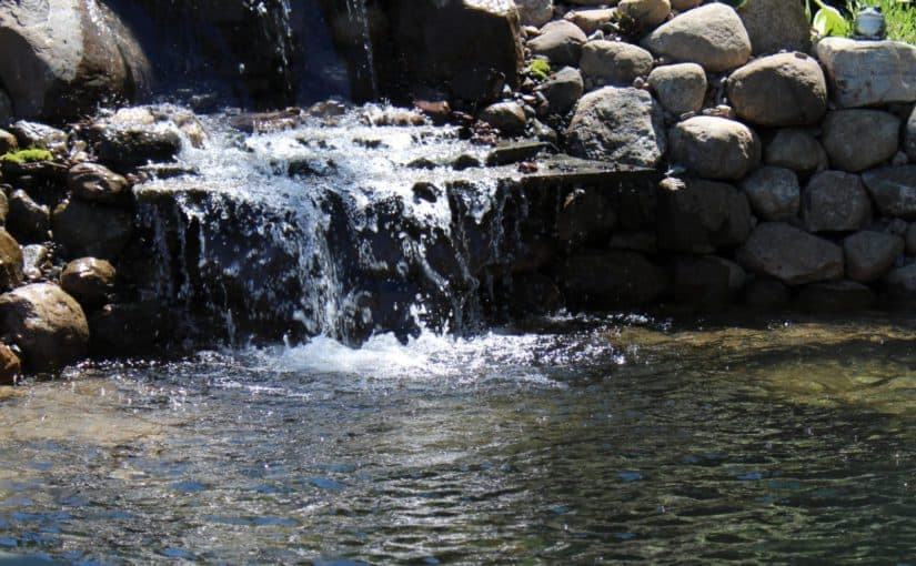 How to Build a Backyard Water Garden – Phase 1