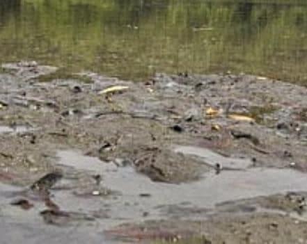 pond sludge