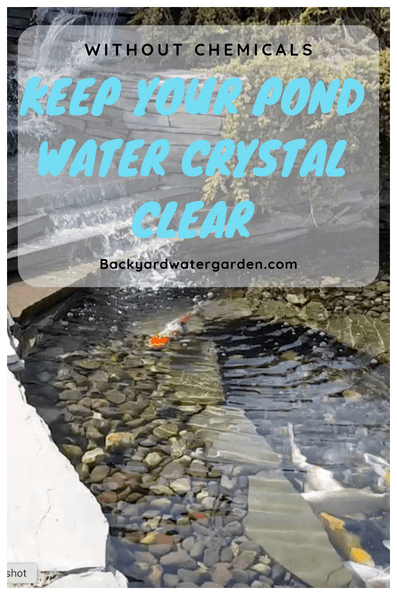 keep your pond water crystal clear without chemicals using UV light