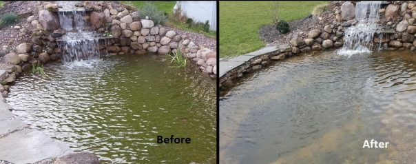 pond algae control before and after