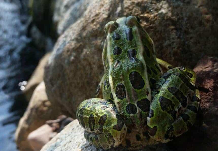 frog in the water garden