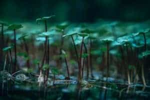 aquatic-plants-background-beautiful-424763