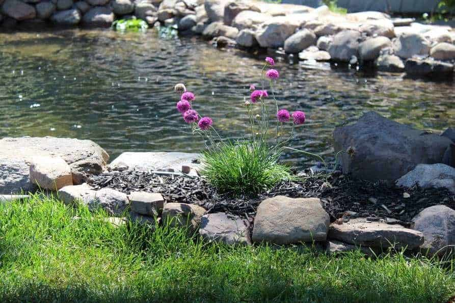 planting around a new backyard pond to make it look natural