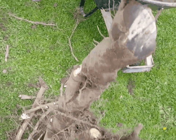 root cut with reciprocating saw