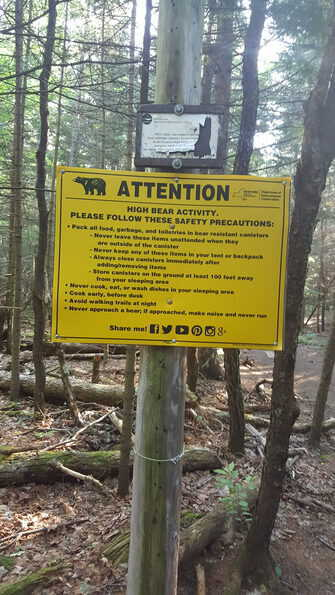 mount marcy trail bear warning