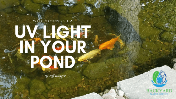 why you need a UV Light in your pond