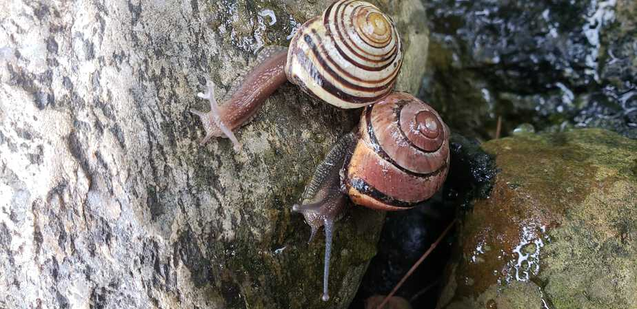 snails around the pond in the garden