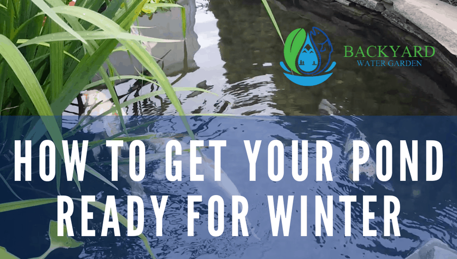 winter prep for your pond