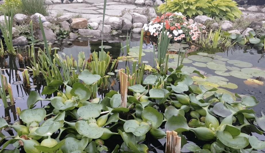 trimmed pond plants