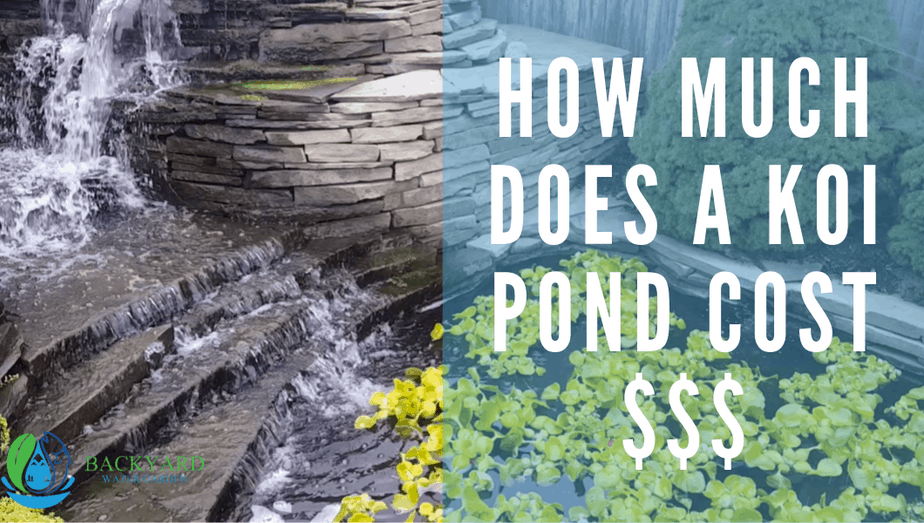 how much does a koi pond cost blog banner (1)