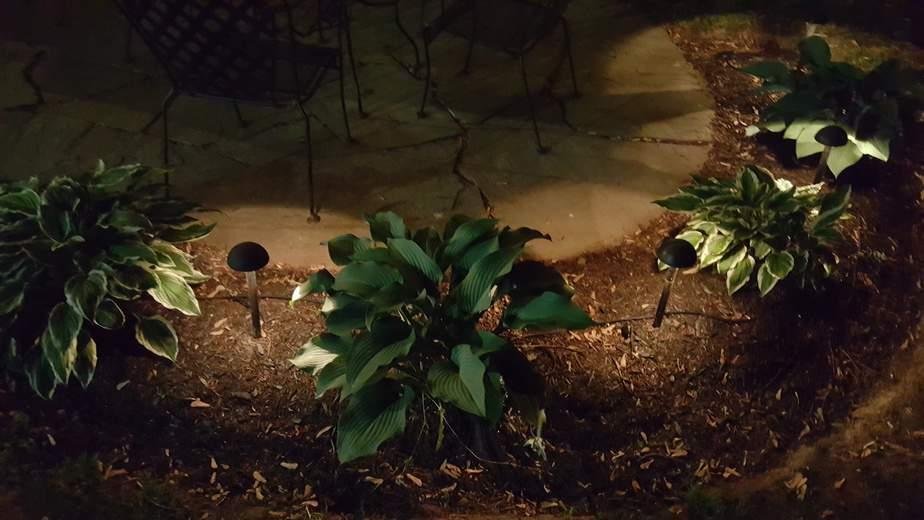 low voltage lighting around water garden and patio